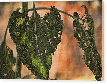 Buggilicious Wood Print by Bonnie Bruno