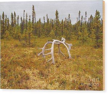 Bull Caribou Winter Kill Wood Print by Adam Owen