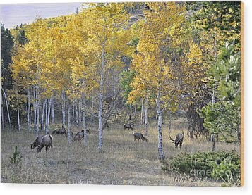 Wood Print featuring the photograph Bull Elk And Harem by Nava Thompson