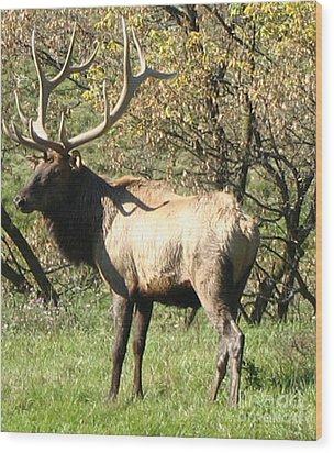 Bull Elk  Wood Print by The Kepharts