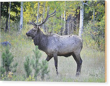 Wood Print featuring the photograph Bull Elk by Nava Thompson