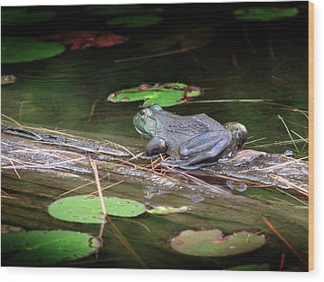 Bull Frog Wood Print by Bruce Ritchie
