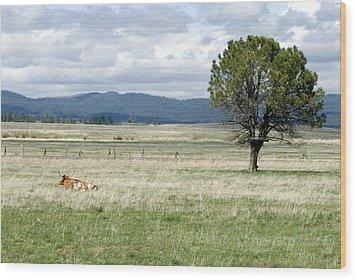 Bull Wood Print by Sara Stevenson