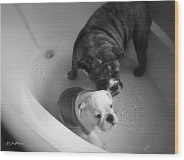 Wood Print featuring the photograph Bulldog Bath Time by Jeanette C Landstrom