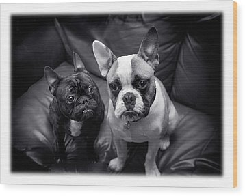 Bulldog Buddies Wood Print