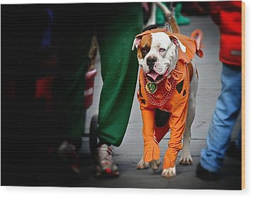 Wood Print featuring the photograph Bulldog In Orange Costume by Jim Albritton