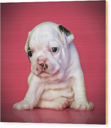 Bulldog Puppy Wood Print by Retales Botijero