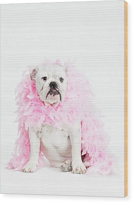 Bulldog Wearing Feather Boa Wood Print by Max Oppenheim