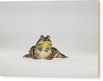 Wood Print featuring the photograph Bullfrog by John Crothers