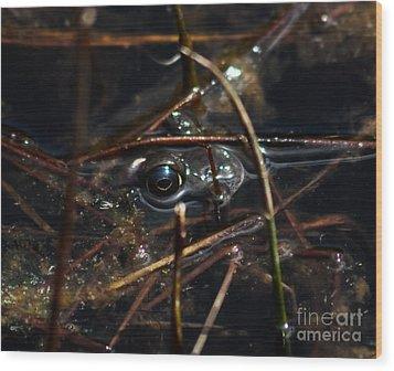 Bullfrog Wood Print by Mitch Shindelbower