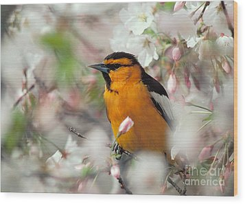 Bullock's Oriole Wood Print by Doug Herr