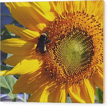 Wood Print featuring the photograph Bumble Bee And Sunshine by Lynnette Johns