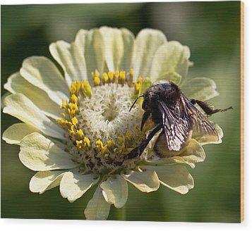 Wood Print featuring the photograph Bumble Bee  by Anna Rumiantseva