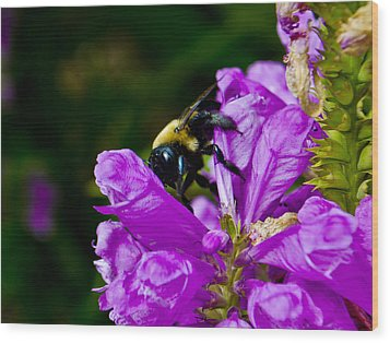 Bumble Bee Wood Print