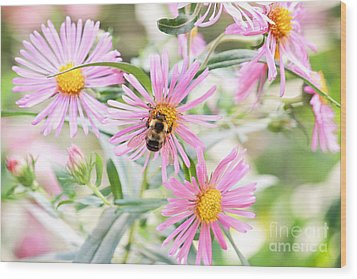 Bumble Bee On Asters Wood Print by Lena Auxier