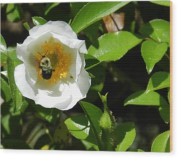 Bumblebee Wood Print by Don L Williams