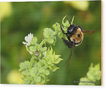 Bumbling On The Basil Wood Print by Paula Tohline Calhoun