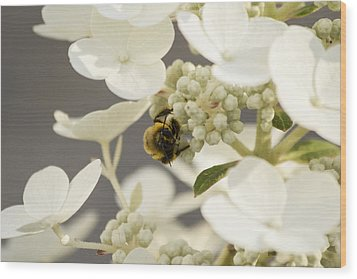 Bunblebee Hiding Wood Print by Michel DesRoches