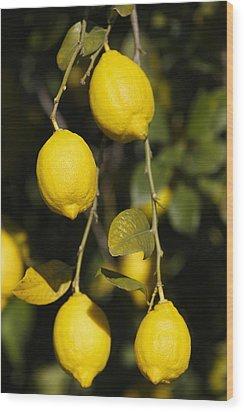 Bunch Of Lemons On Lemon Tree. Wood Print by Ken Welsh