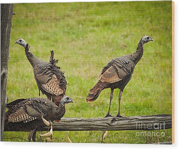 Bunch Of Turkeys Wood Print by Cheryl Baxter