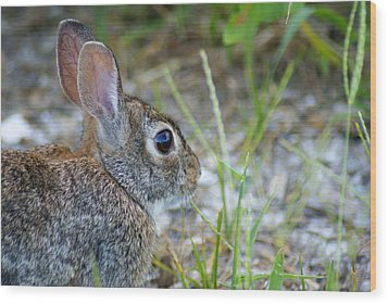 bunny Upclose Wood Print by Florene Welebny