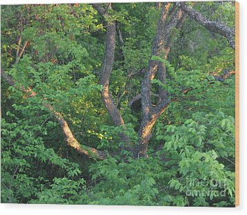 Wood Print featuring the photograph Burnt Daylight by Mark Robbins