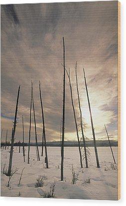 Burnt Pieces Of Black Spruce, Boggy Wood Print by Darwin Wiggett