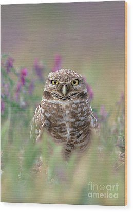 Burrowing Owl Wood Print by Doug Herr