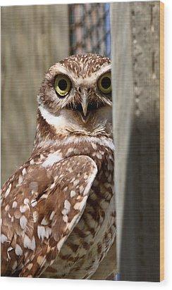 Burrowing Owl On Enclosed Window Seal Wood Print by Mark Duffy