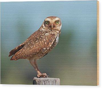 Burrowing Owl Wood Print by Peter Schoen