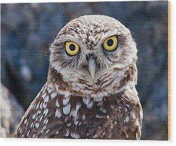 Burrowing Owl Portrait Wood Print by David Martorelli