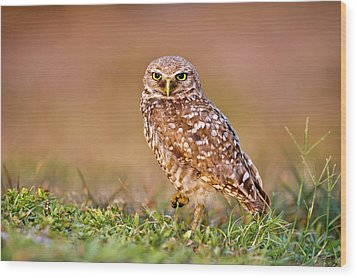 Burrowing Owl Wood Print by TNWA Photography
