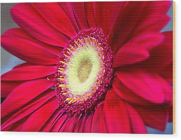 Burst Of Red Wood Print by Diane Giurco
