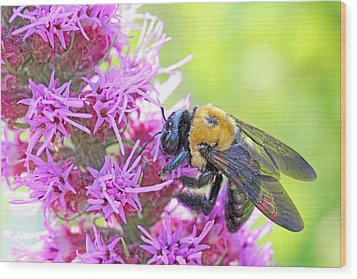 Busy As A Bee Wood Print by Becky Lodes