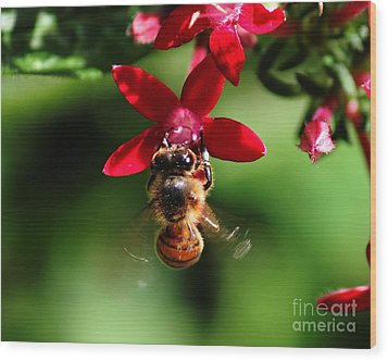 Busy As A Bee Wood Print by Theresa Willingham