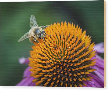 Busy Bee Wood Print by Jen Morrison