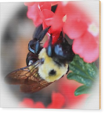 Busy Bee Wood Print by Maureen  McDonald