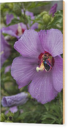 Busy Bee Wood Print by Peter Chilelli