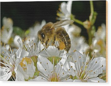Busy Busy Bee Wood Print