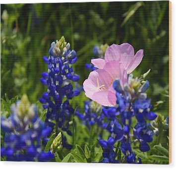 Wood Print featuring the photograph Butter Blue by Lynnette Johns