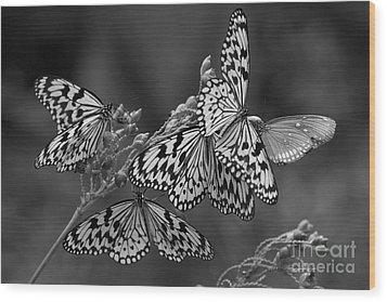 Butter Flies  Wood Print
