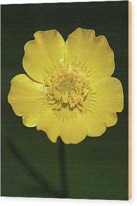 Buttercup Wood Print
