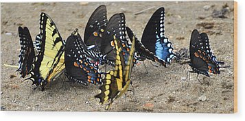 Butterfles And More Butterflies Wood Print by Marty Koch