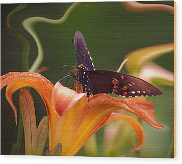 Butterflies Are Free... Wood Print by Arthur Miller