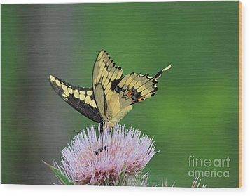 Wood Print featuring the photograph Butterflies Are Free by Kathy  White