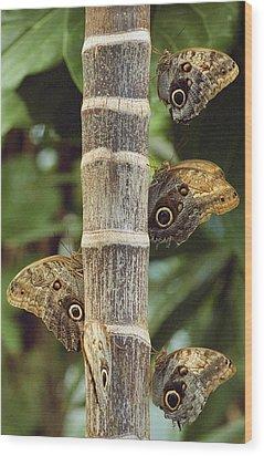 Butterflies Wood Print by Bilderbuch