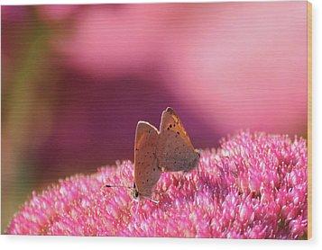 Butterflies Mating Wood Print by Darren Moston