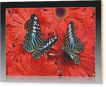 Wood Print featuring the photograph Butterflies On Red Flowers by Rima Biswas