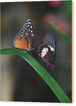 Butterflies Wood Print by Skip Willits