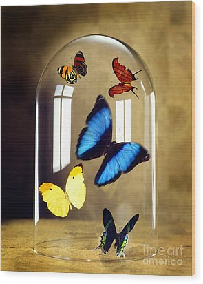 Butterflies Under Glass Dome Wood Print by Tony Cordoza
